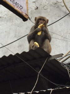 Vendors tossed bananas up to the monkeys which run along the overhangs and electrical wires.