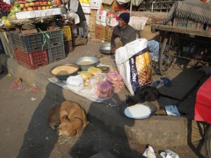 Outskirts of Old Delhi--a vendor selling corn to feed to birds, with a large pan of milk for stray cats and a street dog curled up on front.